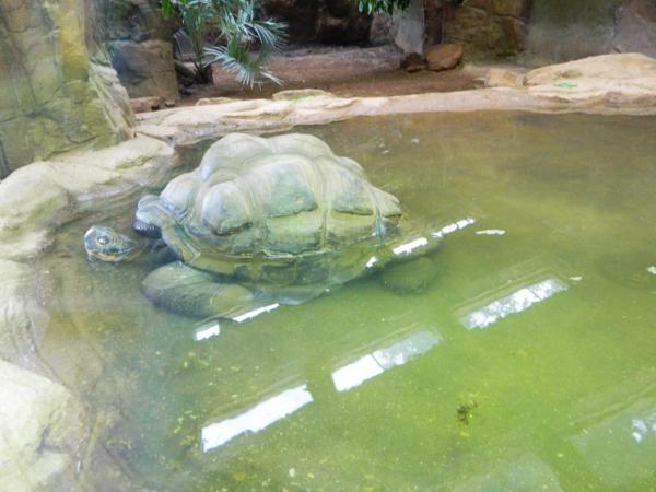 Zoo 2012 572