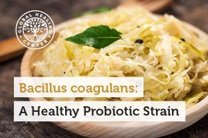Bacillus coagulans can be found in fermented foods such as sauerkraut.