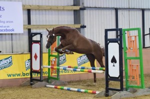 Mole at Futurity jumping