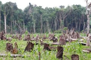 tropical deforestation statistics - Food & livelihoods