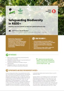 Safeguarding biodiversity in REDD+ : Necessary but not sufficient to help slow global biodiversity loss