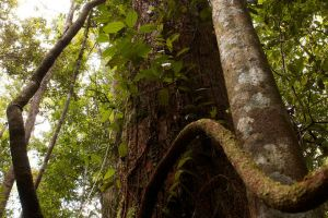 David Brand puts New Forests timberland impact funds on the map