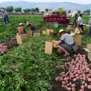 Scaling up Social Enterprise for Sustainable Landscapes