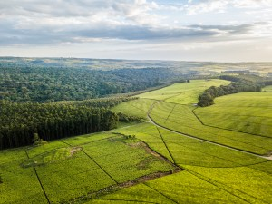 Let's take this further: Advancing the conversation on the private sector and landscapes