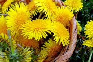 Germany's take on the global bioeconomy, from definition to dandelion