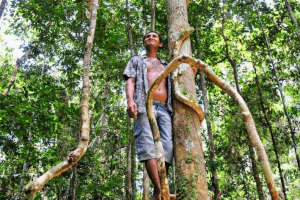 Transforming REDD+: Lessons and new directions