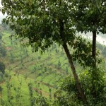 Where – and why – is agroforestry hiding?