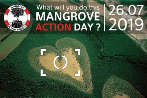 Show how much #MangrovesMatter: Take part in Mangrove Action Project photo competition