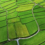 Fast facts: Agriculture