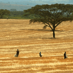 How we can achieve sustainable wood fuel production in Sub-Saharan Africa
