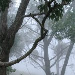Cloud forests: narrow bands of biodiversity filled with mist, fog and mystery