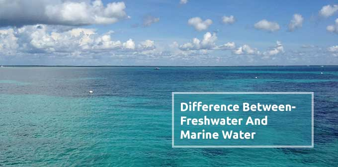 Difference Between Freshwater And Marine Water