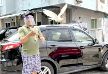 Video Of Daddy Freeze's Pigeons Flying As He Releases Them
