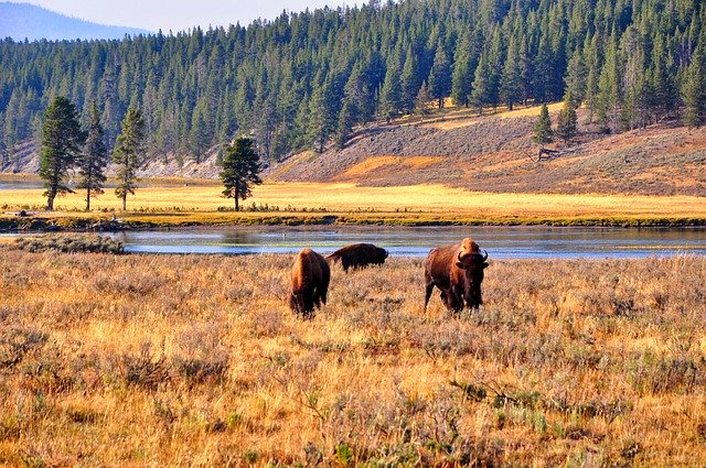 Beautiful Yellowstone National Park, one of the best places to visit in the USA
