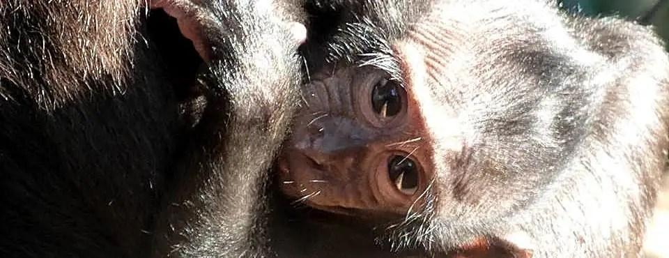 Baby at the Indonesia Wildlife Sanctuary