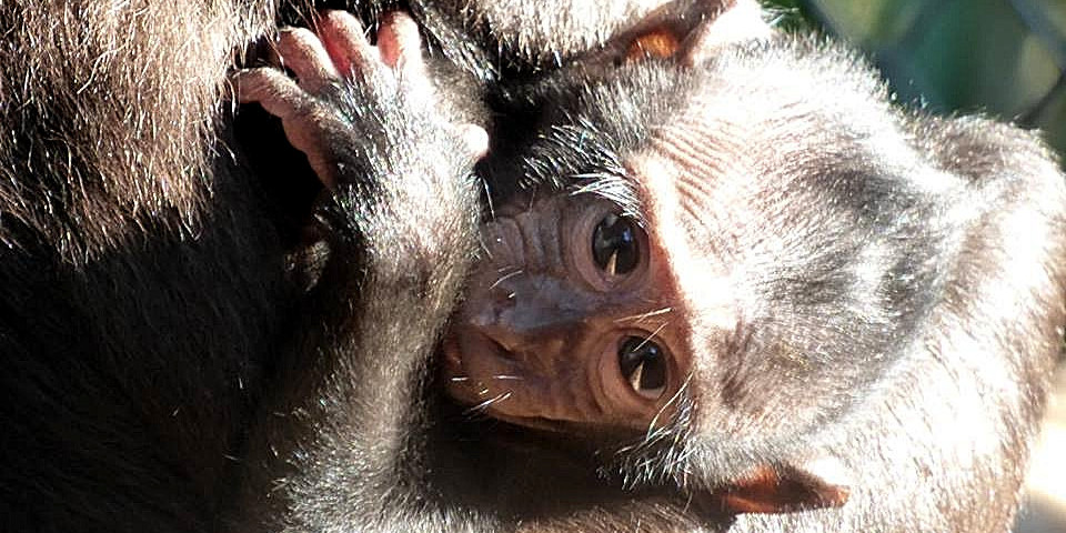 young resident at the Indonesia Wildlife Sanctuary