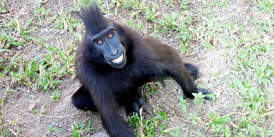 Friendly resident at the Indonesia Wildlife sanctuary