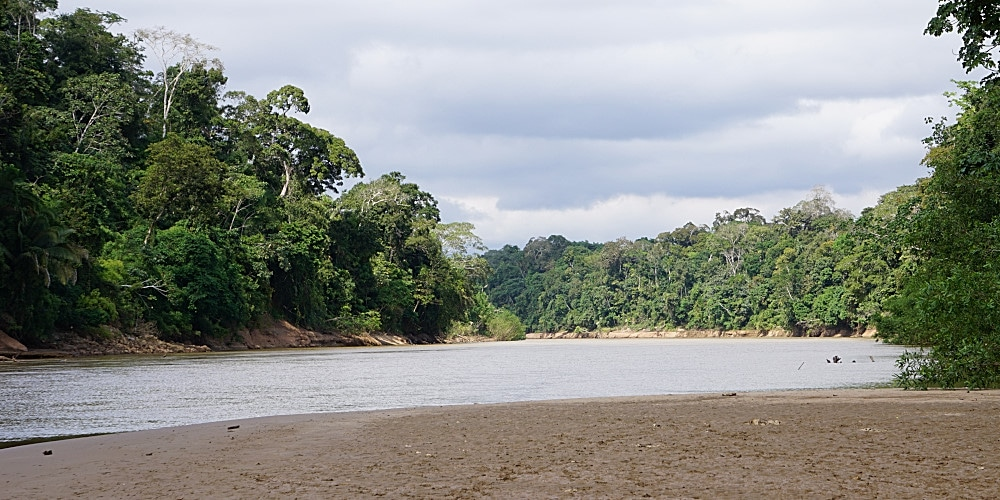 View in the Amazon