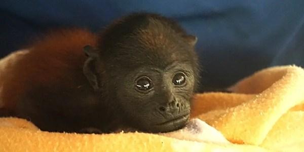 Peru Amazon Wildlife Sanctuary baby monkey