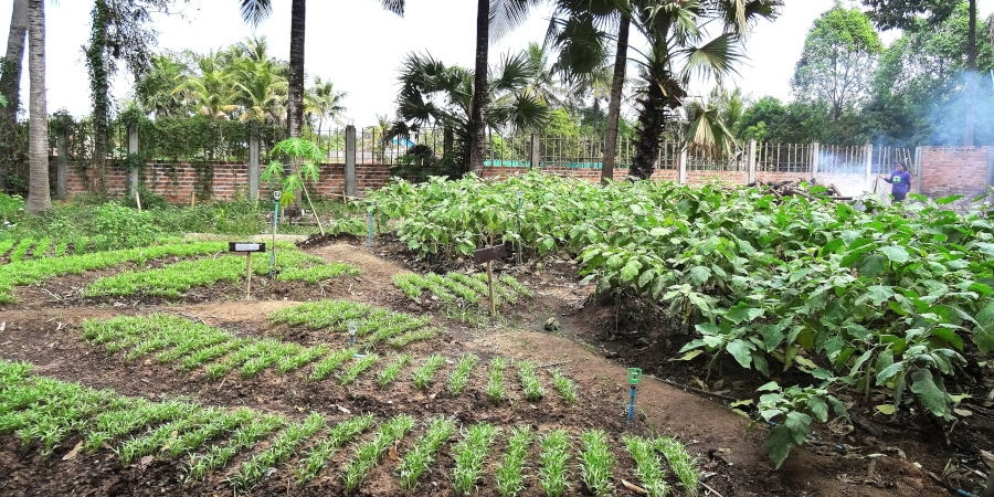 Food and Farming project Cambodia