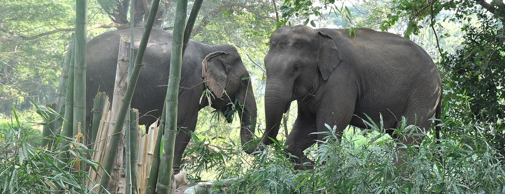 Elephant love at the sanctuary