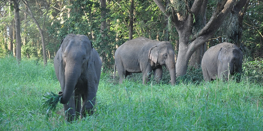 Elephants enjoying their time at the sanctuary