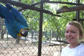 Volunteer at the Thailand wildlife sanctuary
