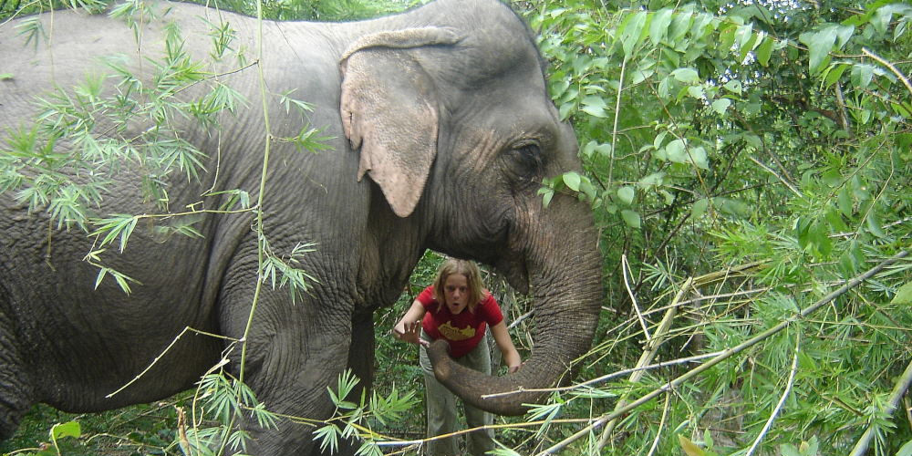 Volunteering with elephants at the Thailand Sanctuary