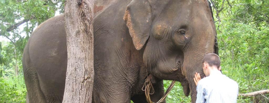 Cambodia Elephant
