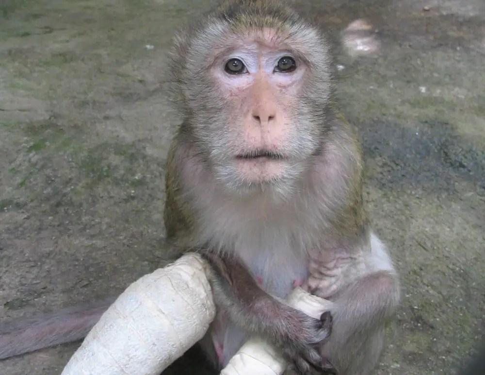Thailand Wildlife Sanctuary Rescued Animals