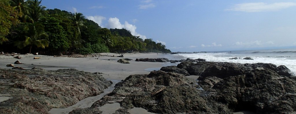 Costa Rica turtle conservation project
