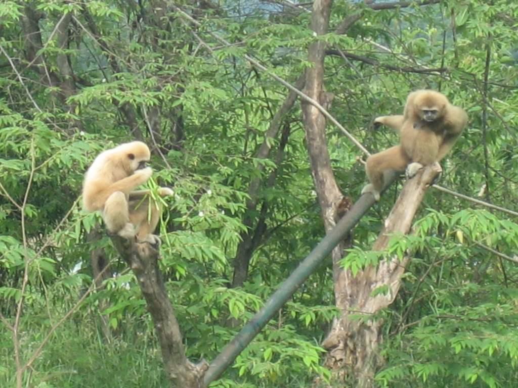 Wildlife Rescue in Thailand