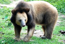 Cambodia Bear Sanctuary