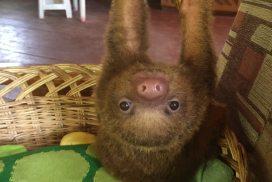 Newborn animals wildlife sanctuary Peru