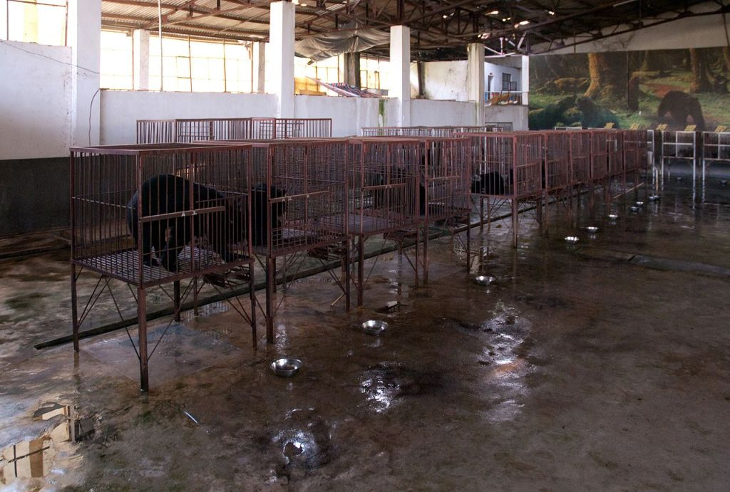 Bears in cages