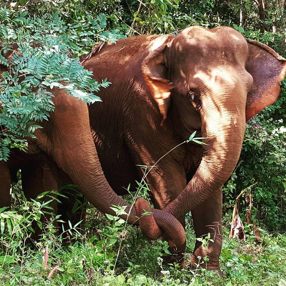 Help the rescued elephants at the sanctuary