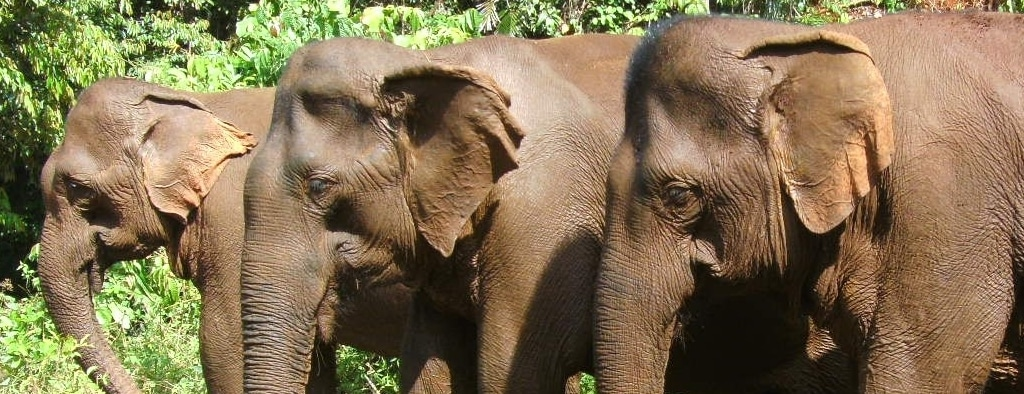 Small herd at the elephant sanctuary