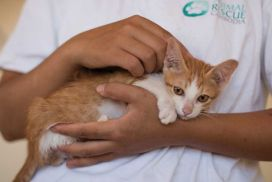 volunteering experience at the Cambodia Cat and Dog Rescue Project