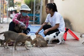 Cambodia cats and dogs