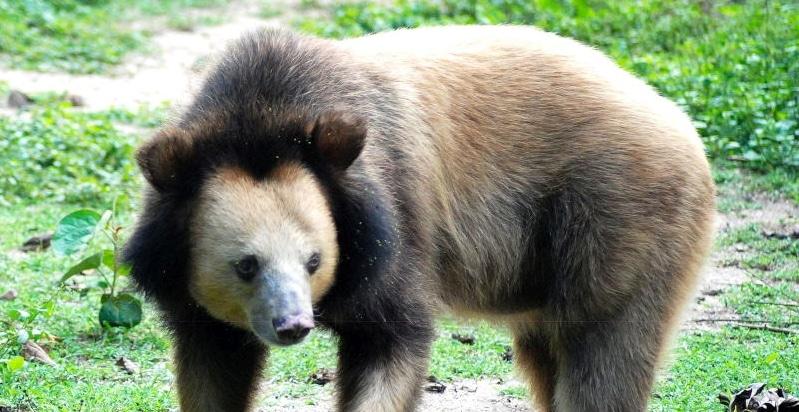 Bear Sanctuary in Cambodia