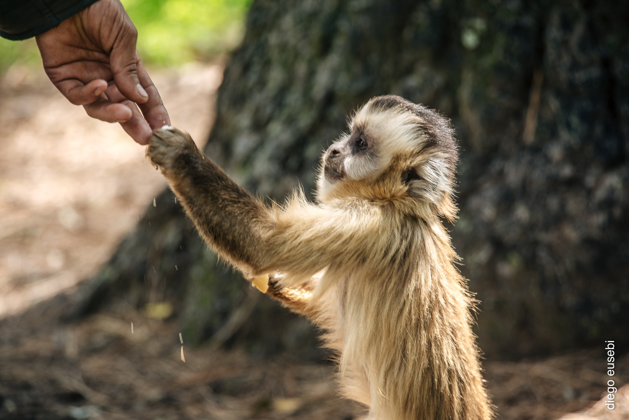 Young Monkey at the Argentina Sanctuary
