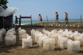 Keeping nests safe un hatchery at the Costa Rica Sea Turtle Conservation Project