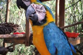 Wildlife Amazon Shelter Peru Globalteer