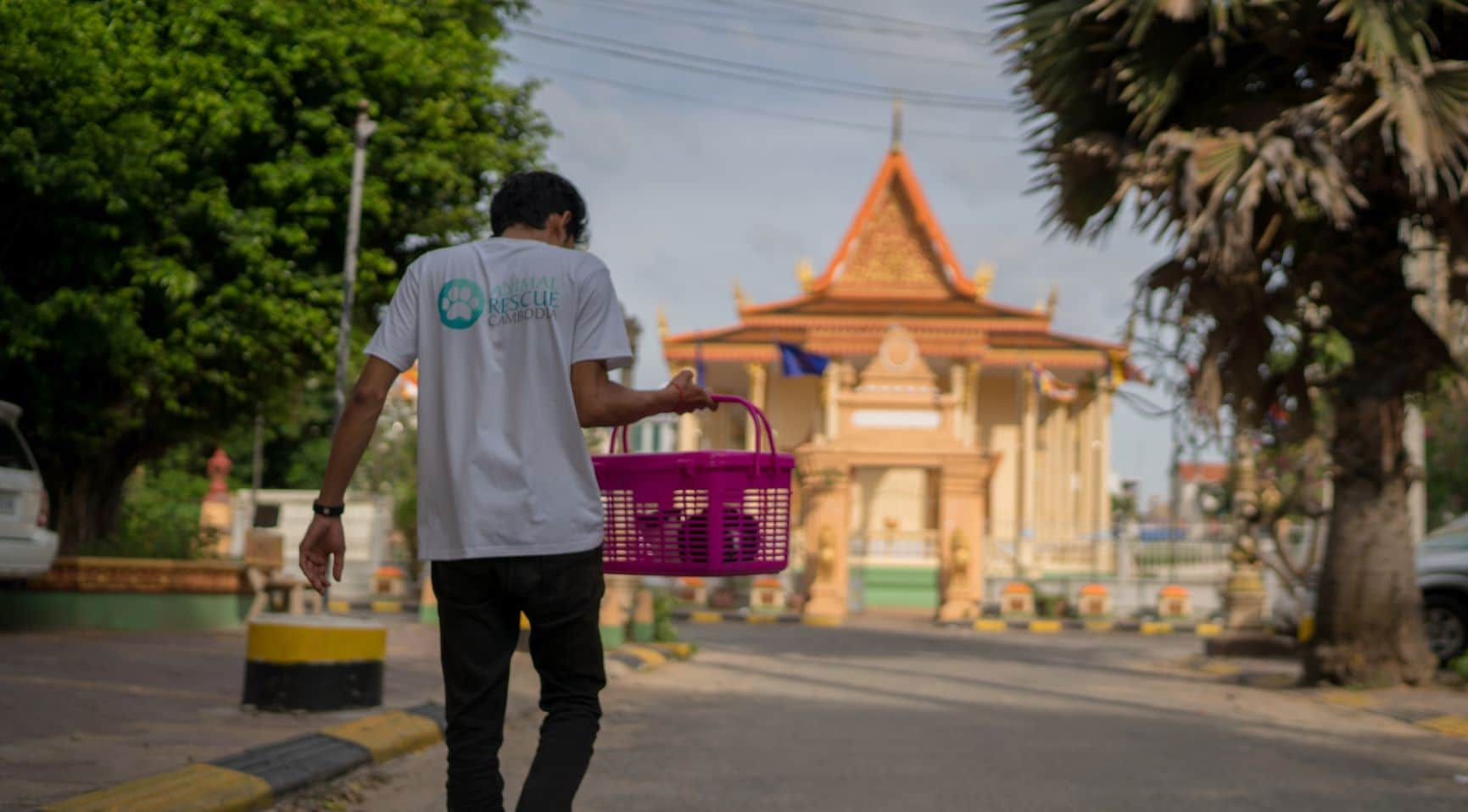 Cat and Dog Rescue Volunteer Cambodia
