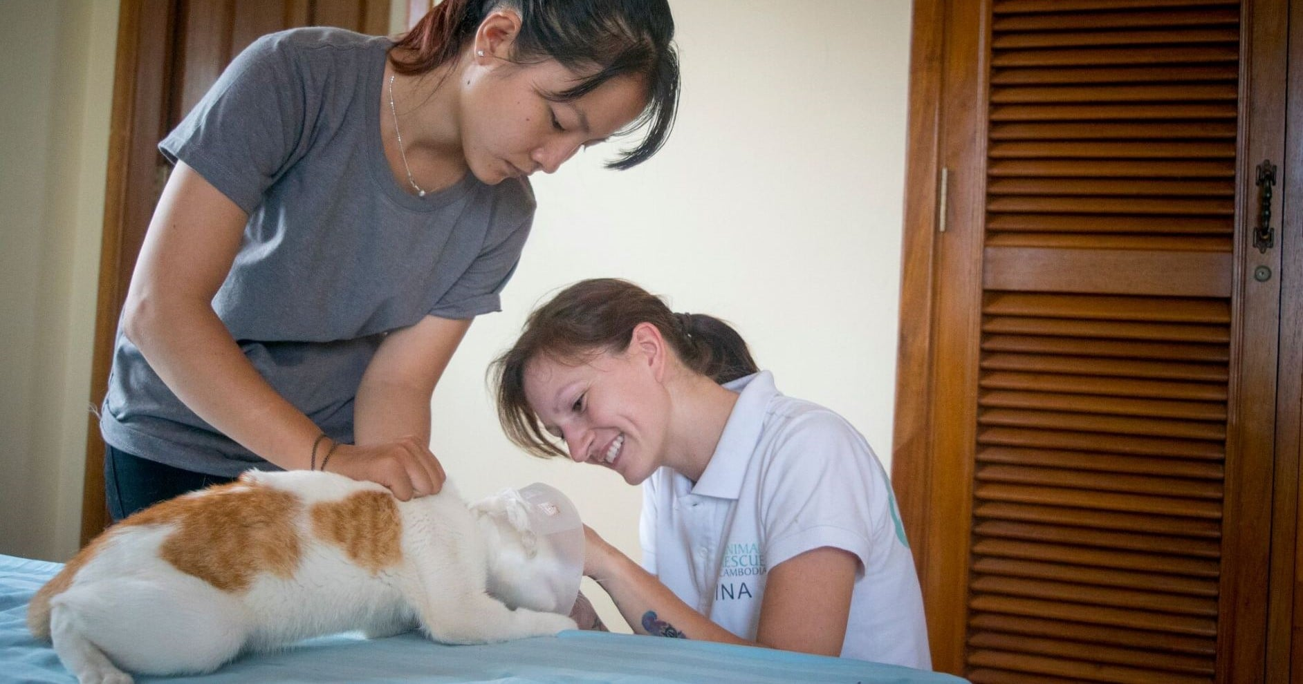 Care for Rescued Dogs and Cats Cambodia