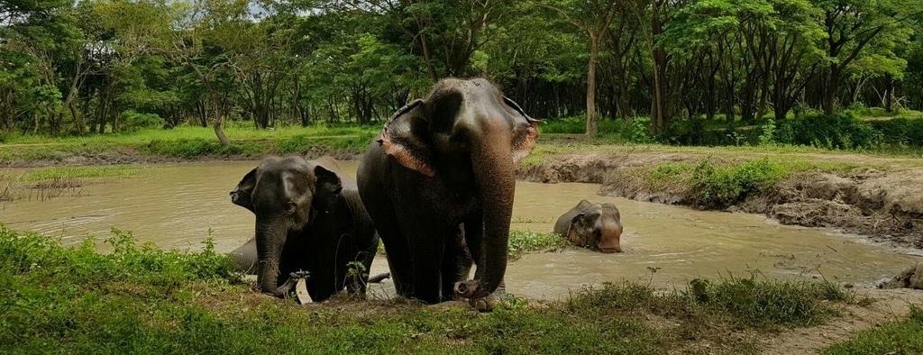 Help Elephants Abroad