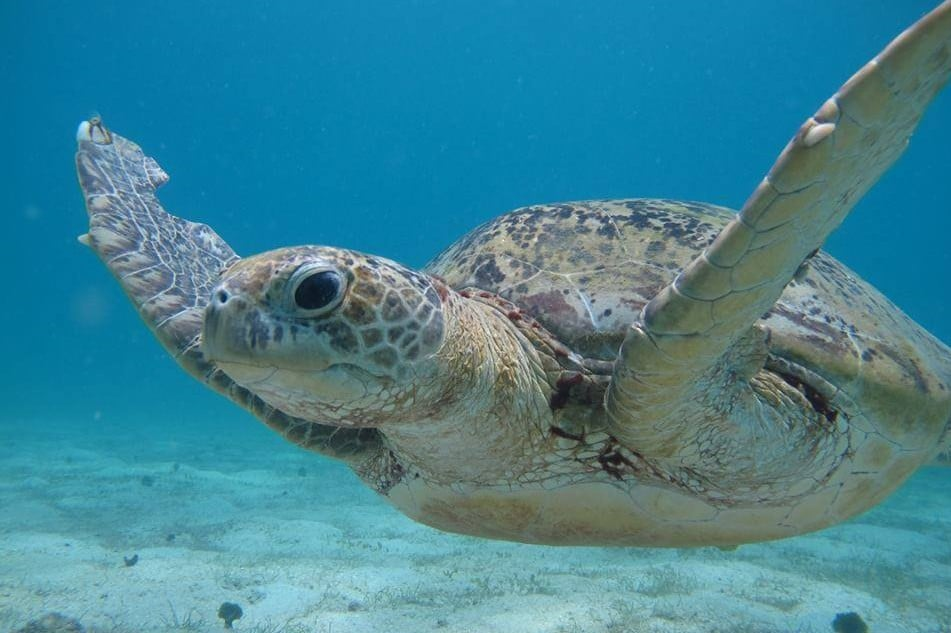 Malaysia Sea Turtle Conservation Project