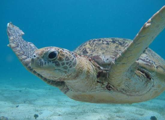 Helping Sea Turtle Conservation Efforts