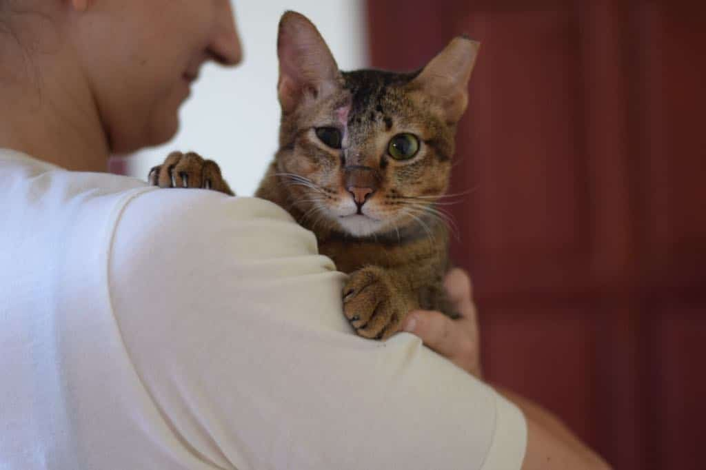 volunteer experience at the cambodia cat and dog rescue project