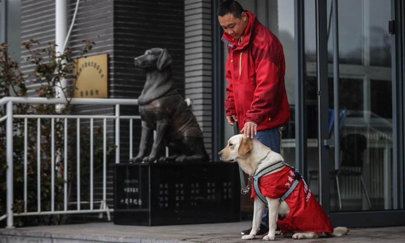 Trainer Fu Mingyan trains a guide dog in Dalian, northeast China's Liaoning Province, April 22, 2021.Photo:Xinhua